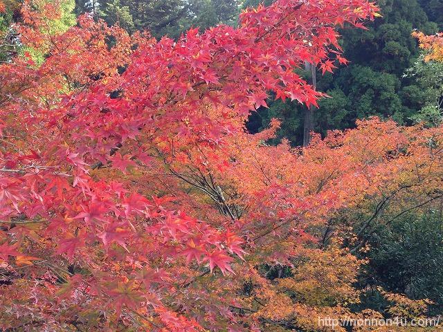 宮島に紅葉狩りに行ってきました①
