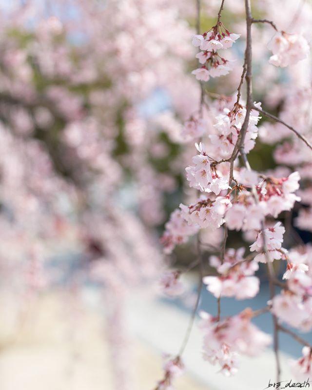 「桜の花の紅茶王子」山田南平 感想⑤