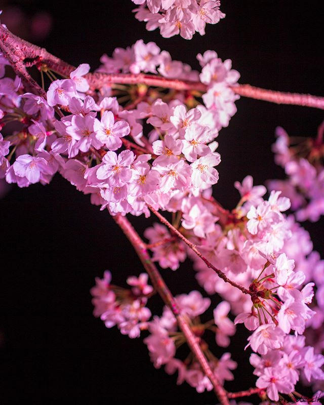 「桜の花の紅茶王子」山田南平 感想①